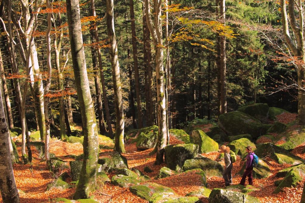 Filmato Guide Alpine Lombardia; nei boschi